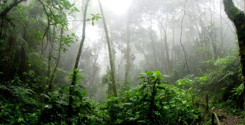 Medicinal Plants of the Amazon